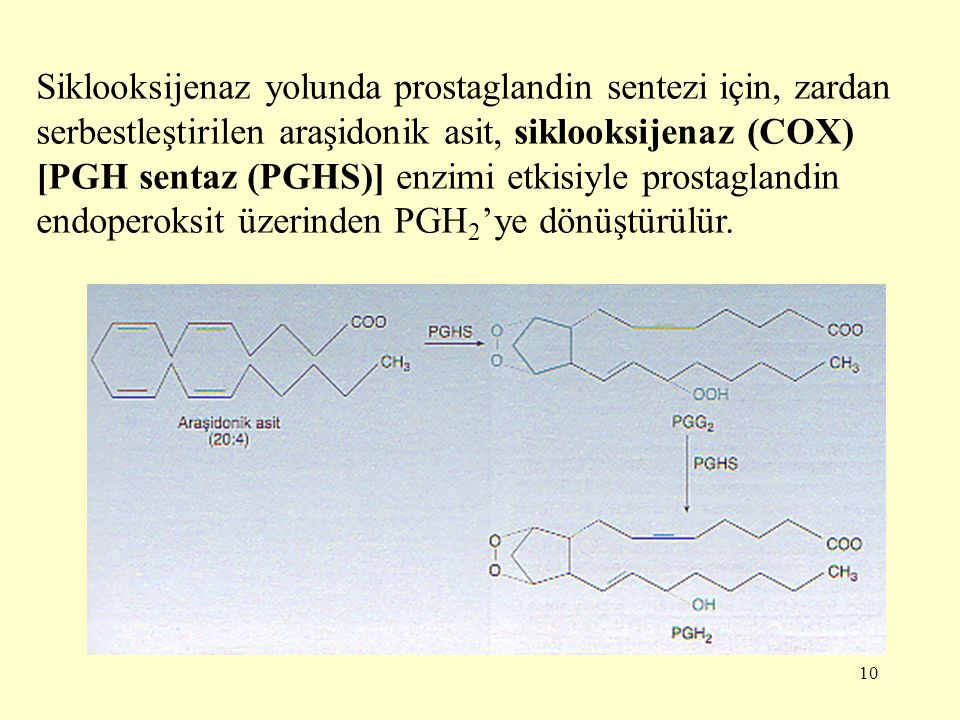Siklooksijenaz yolunda prostaglandin sentezi için, zardan serbestleştirilen araşidonik asit, siklooksijenaz (COX) [PGH sentaz (PGHS)] enzimi etkisiyle prostaglandin endoperoksit üzerinden PGH2'ye dönüştürülür.